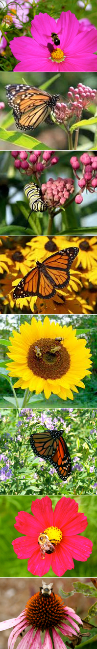 Save Butterflies and Bees