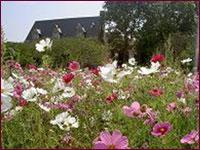 Florabunda Seeds has grown into one of the largest suppliers of Victorian Cottage Cottage Garden Flower Seeds.