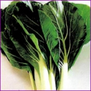 CABBAGE - BOK CHOY