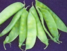 PEAS - DWARF GREY SUGAR SNAP PEAS