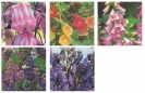 COLLECTION - PERENNIAL FAVOURITES