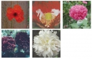 COLLECTION - POPPY