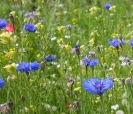 MIX - NORTH COUNTRY WILDFLOWER  - ** SOLD OUT **