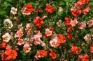 MASK FLOWER